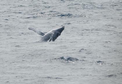 クジラジャンプ