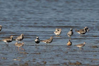 干潟の鳥達