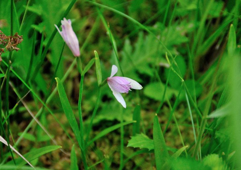 http://tori-mako.sakura.ne.jp/blog/archives/image/1406/DSC_2044tokisou800.JPG